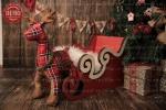 بک دراپ کریسمس تم سورتمه -کد 6444